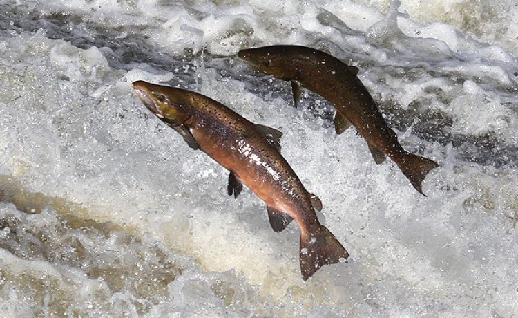 The Salmon Theory