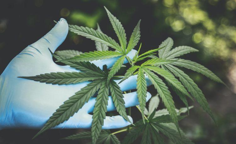 WA medicinal cannabis startup makes ASX debut